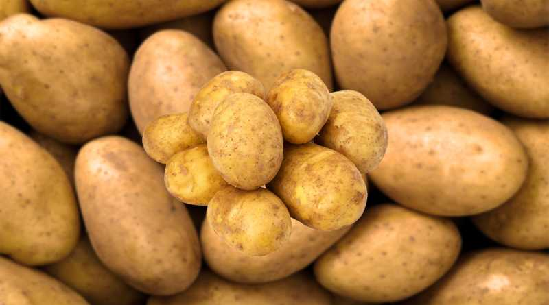 10 Health and Nutrition Benefits of Potatoes